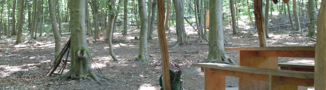 Forum für Systemaufstellungen im Wald